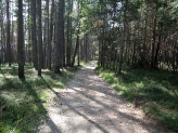 02-Waldweg