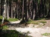 04-Waldweg Telfen