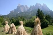 14-Getreide in Sankt Vigil