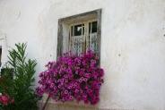 21-Blumenfenster