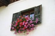 20-Blumenfenster