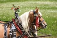 29-Pferde