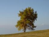 14-Herbstbaum