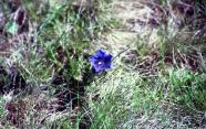 Impressioni di primavera