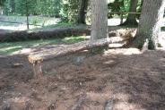 16-Travi in legno